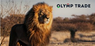 Những con sư tử dạy chúng ta điều gì về trading?